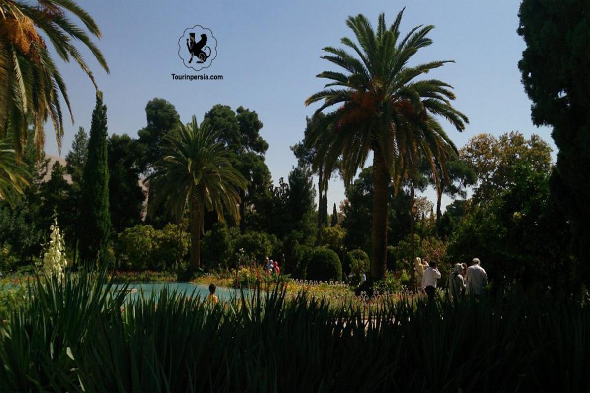 Trees Of Eram Garden Of Shiraz