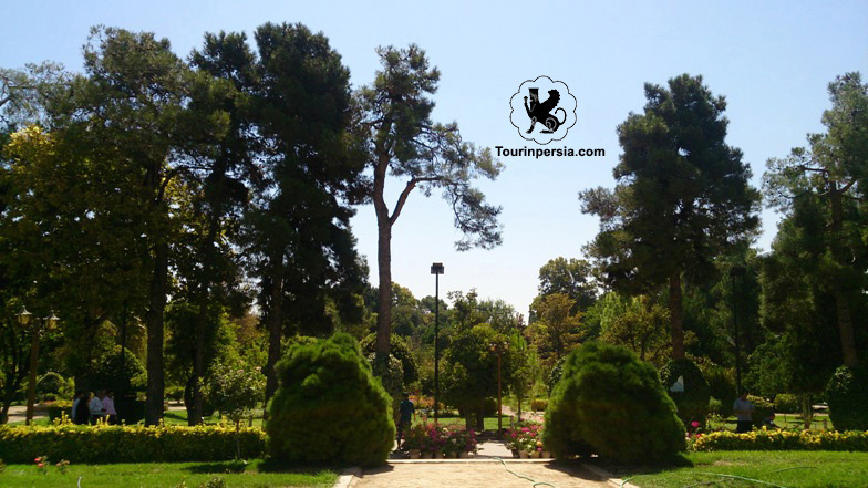 The Pine Trees In Eram Garden