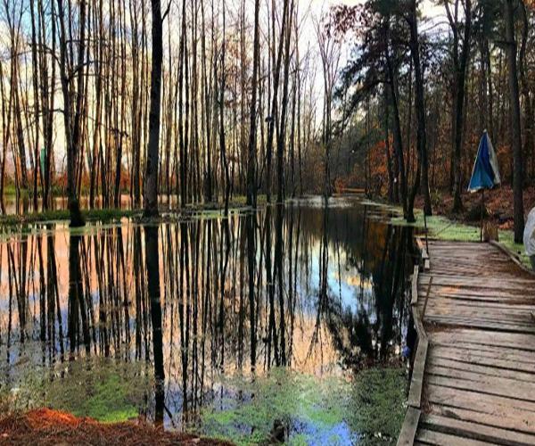 Kiashahr Forest Park in Gilan province
