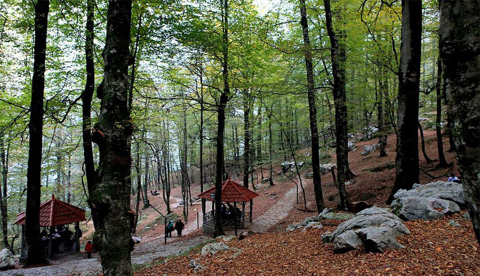 Forest In Namak Abroud