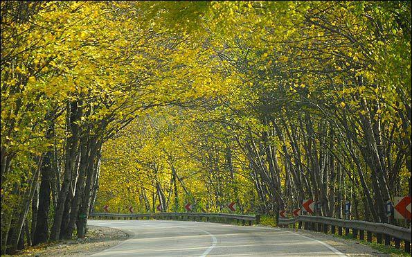 جاده پارک جنگلی النگدره