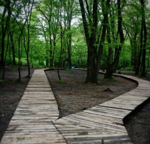 پارک جنگلی النگدره در استان گلستان