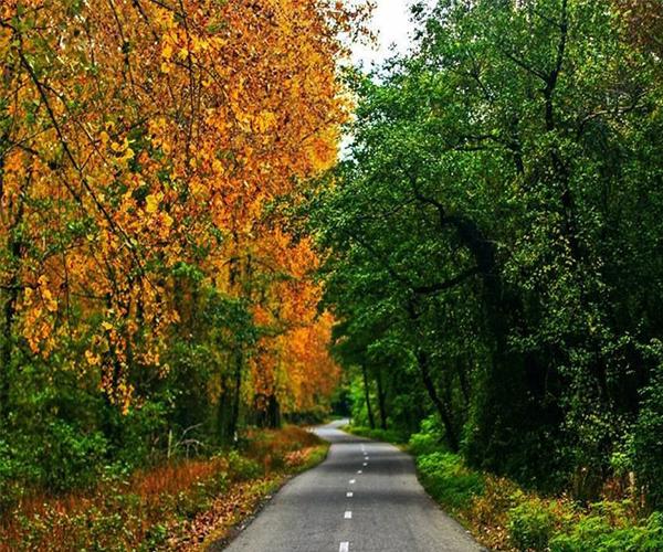 پارک جنگلی گیسوم در گیلان