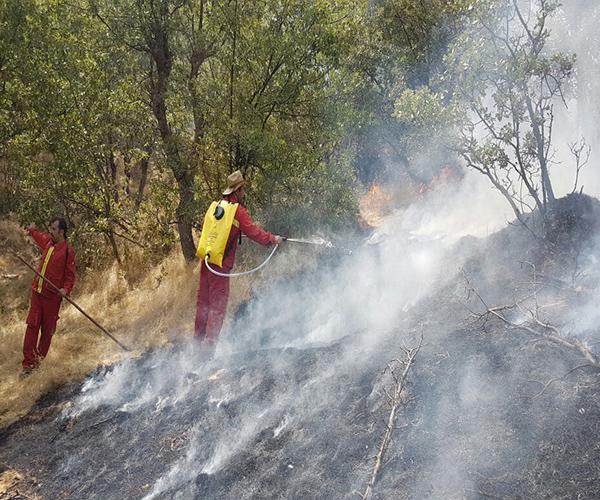 آتش سوزی جنگل خاییز
