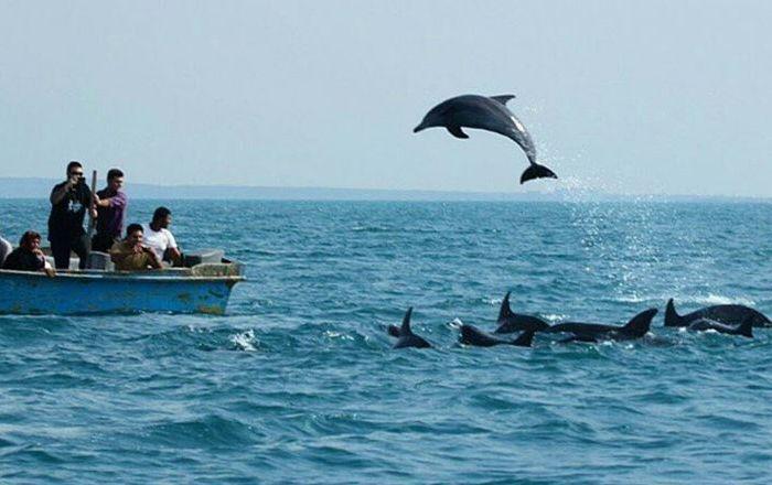 دلفینها در خلیج گواتر