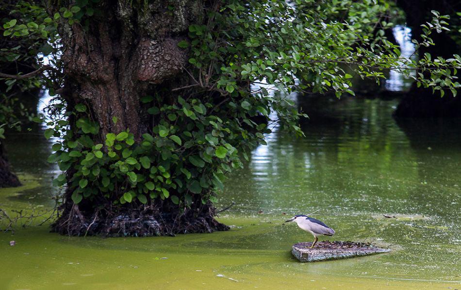 پرنده در تالاب استیل