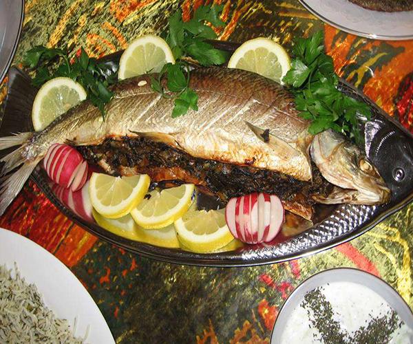 ماهی شکم پر شمالی