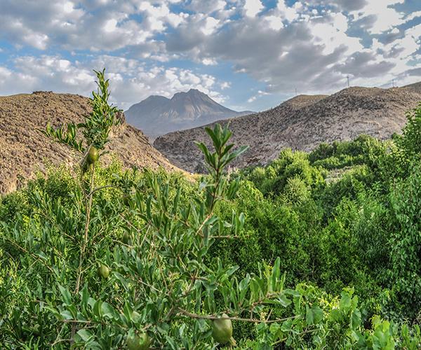 روستای تمین بهشتی سرسبز در کویر