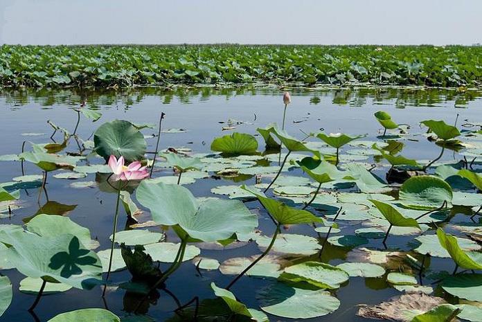 دریاچه سراب نیلوفر در کرمانشاه