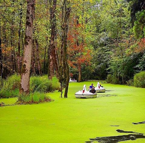 قایقهای پدالی در پارک جنگلی سراوان