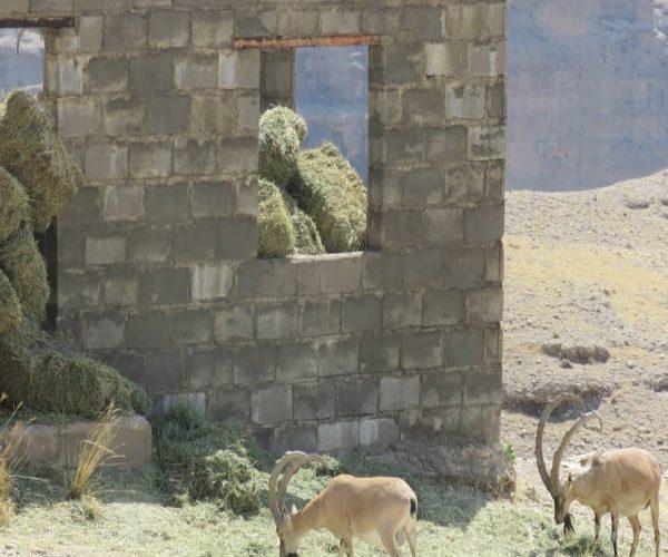 حمیات از پروژه علوفه برای منطقه چهل پا